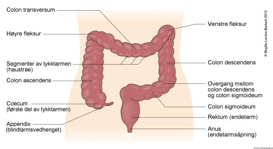 hadd eller hatt stikkende smerter i nedre del av magen