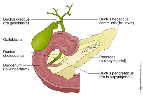 hvilken oppgave har insulin i kroppen