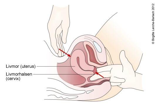 hva gjør en gynekolog