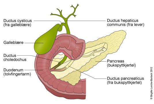 kronisk bukspyttkjertelbetennelse symptomer