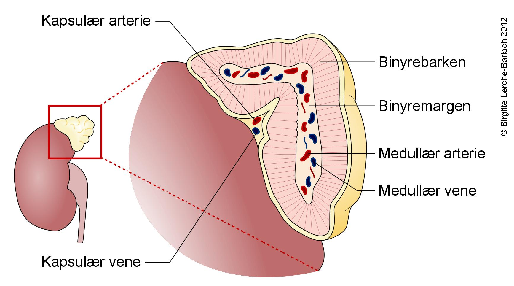 kortikosteroider og glukokortikoider